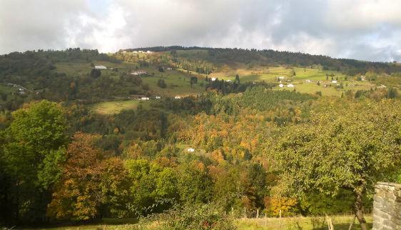 paysage verdoyant et paisible